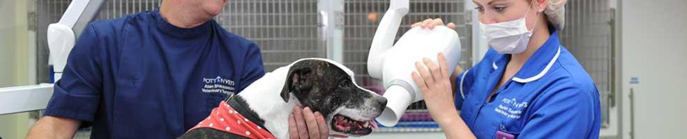 Dental care on dog.